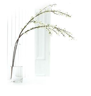Blossom Stems